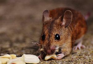 L'Omeopatia dice NO alla sperimentazione su animali. Li vogliamo così: liberi e... sani!